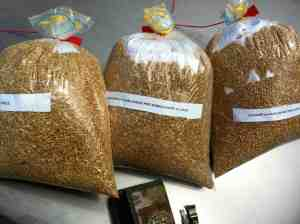 Wheat-Samples